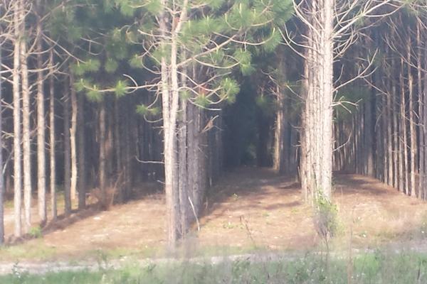 Multiple Harvest Options With JH Fitzgerald Jr Logging Inc